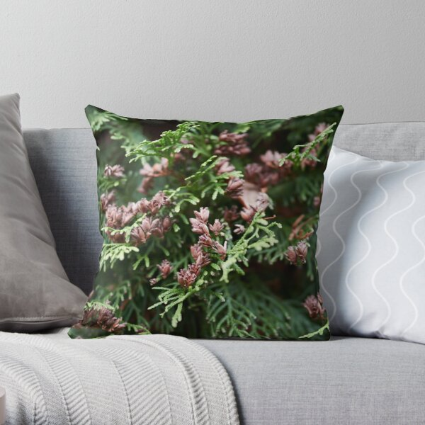 Maybe there are some seeds too. Northern white cedar Throw Pillow