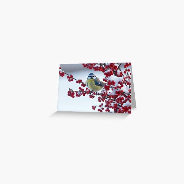 Blue tit Greeting Card