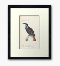 Zoological Atlas - Collection de 100 Planches' by Paul Gervais () - Nouvelle-Guinee Framed Print