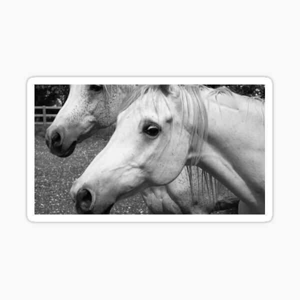 Houmard Arabians - Switzerland  Sticker