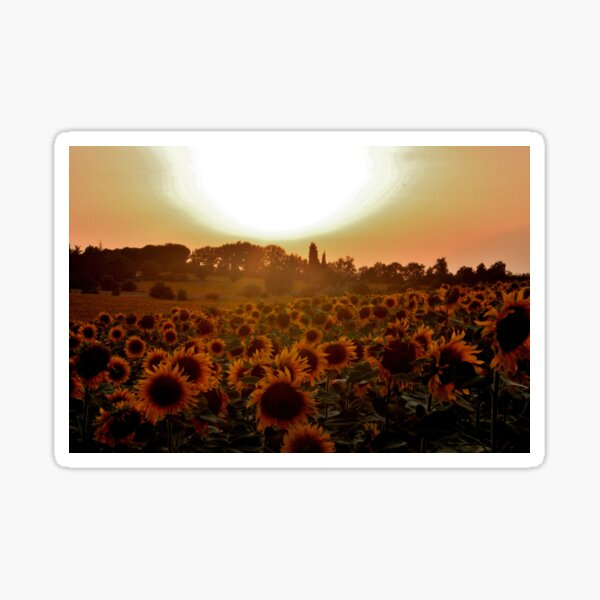 GIRASOLE 3 Sticker