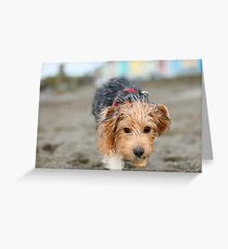 Wire-hair terrier Greeting Card
