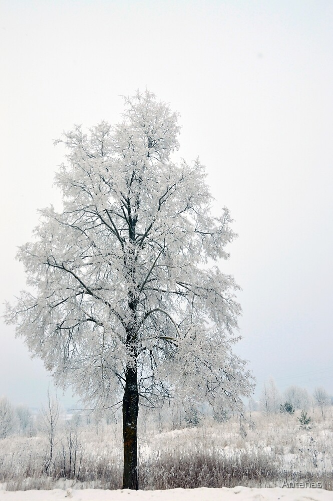 Tree in Winter by Antanas