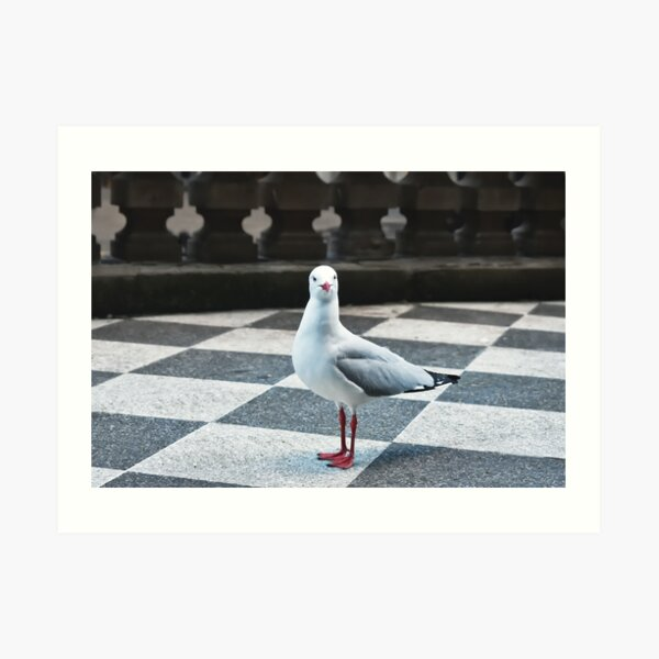 Seagulll in the City Art Print