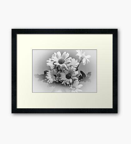 Chrysanthemum's in mono Framed Print