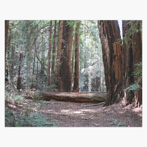 Fallen Tree in Muir Woods Jigsaw Puzzle