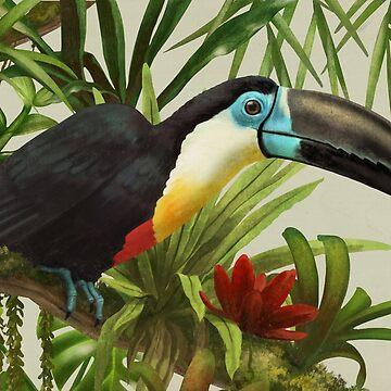 Channel-billed toucan by ikerpazstudio