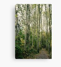 Trees are giants. Canvas Print