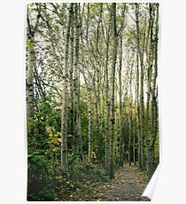 Trees are giants. Poster