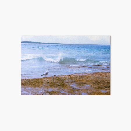 Seagull by the Sea Art Board Print