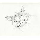 Sleeping Cat sketch by Asia Barsoski