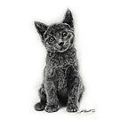 Grey Kitten by Asia Barsoski