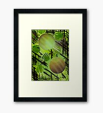 fenced in spheres Framed Print