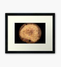 Inside a cypress Framed Print