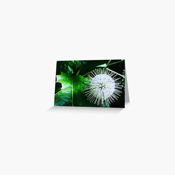 Flutter-Bom-Bom Greeting Card