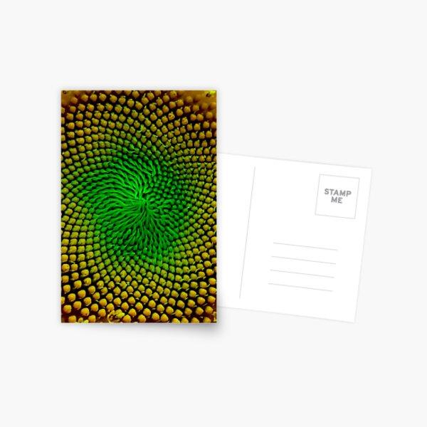 Eye of the Universe Postcard