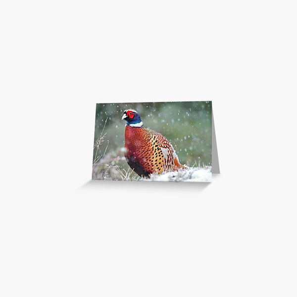 Male Pheasant in the Snow Greeting Card