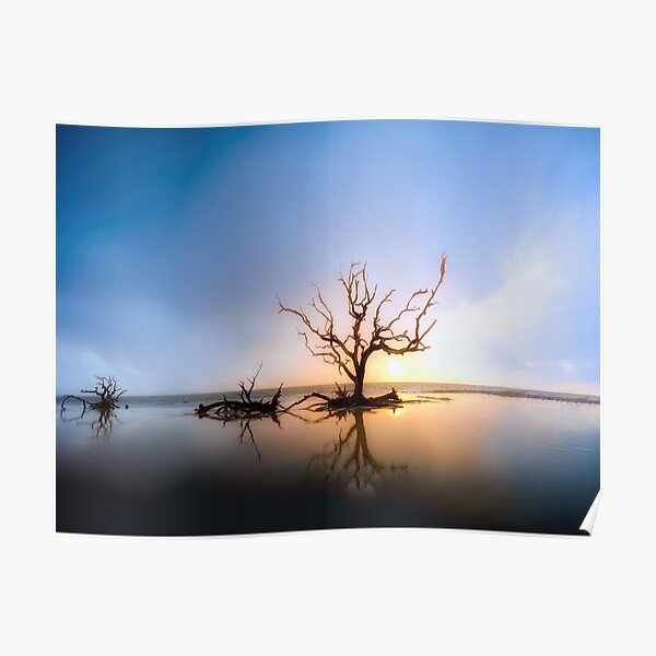Driftwood Reflection Along the Waters Edge on Jekyll Island Beach Poster