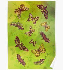 Butterflies Pattern Poster