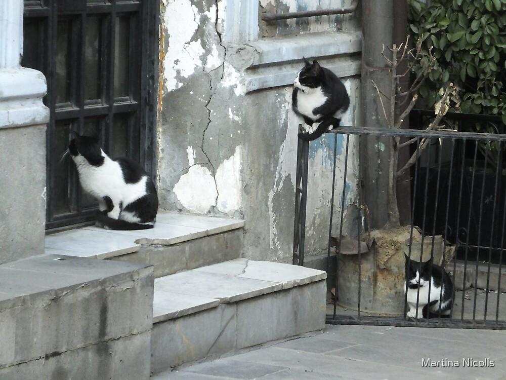 Cats awaiting by Martina Nicolls