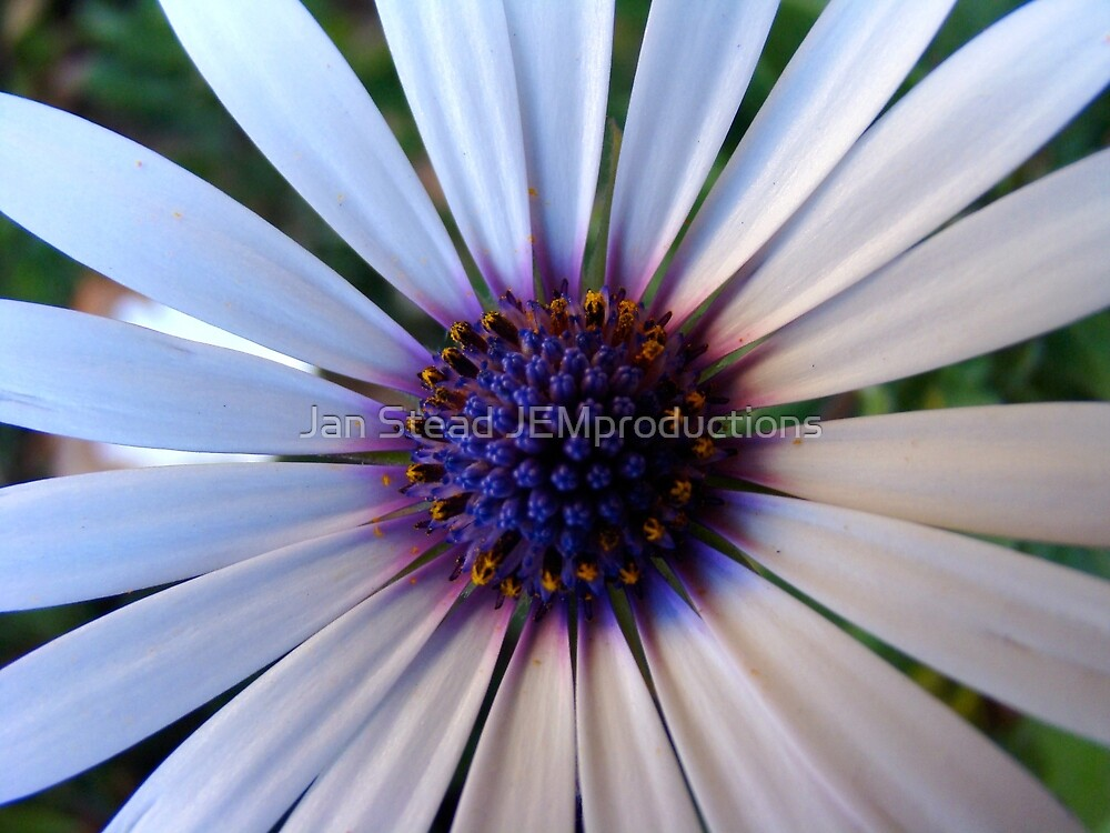 in the centre by Jan Stead JEMproductions