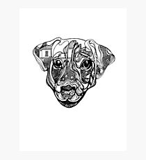 Nure- the dog Photographic Print