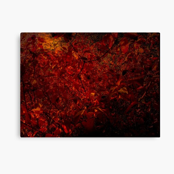 Red fire forest Canvas Print