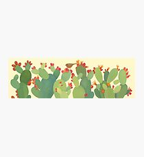 Prickly Pear, Long Photographic Print