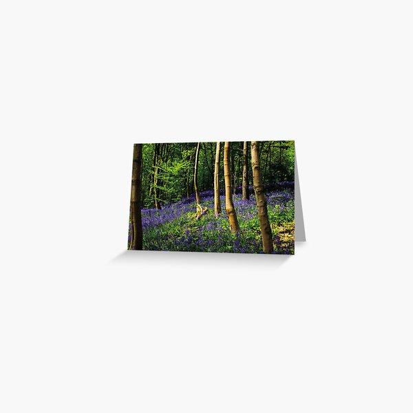 Sunlit Springtime Bluebell Woodland Greeting Card