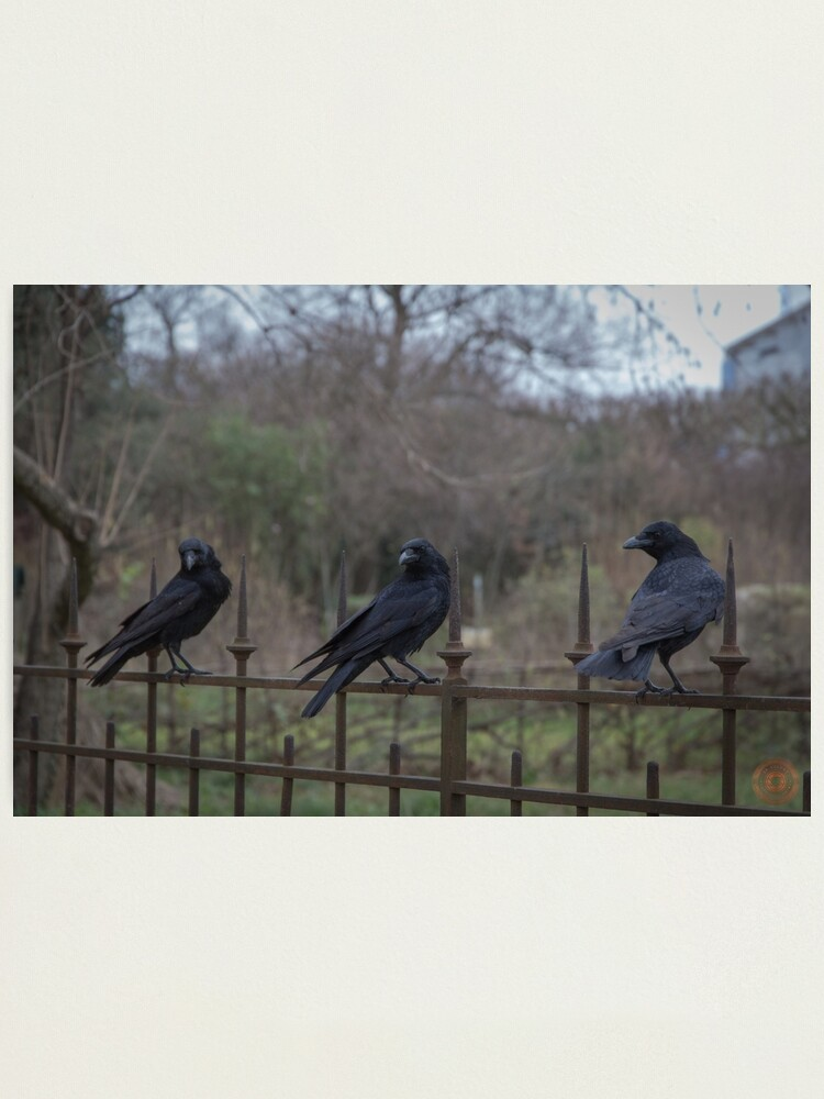 Alternate view of Murder of Crows - Paris Photographic Print