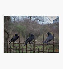 Murder of Crows - Paris Photographic Print