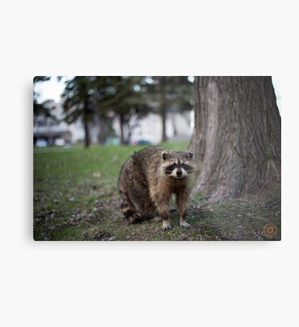 """Defiance"" - Raccoon portrait Metal Print"