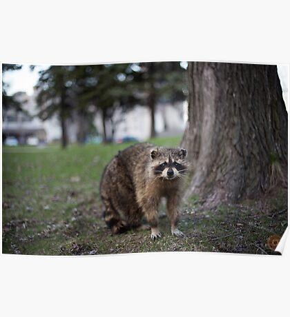 """Defiance"" - Raccoon portrait Poster"