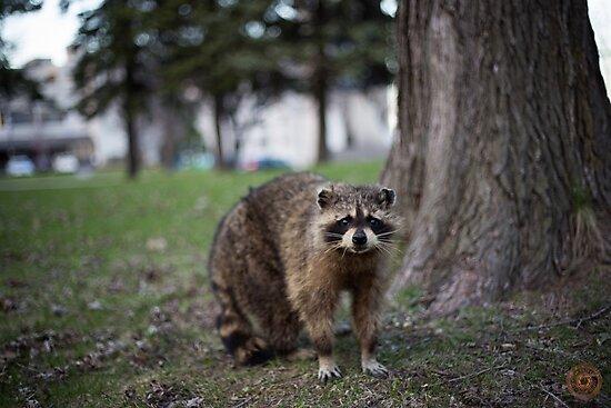 """""""Defiance"""" - Raccoon portrait by jpvalery"""