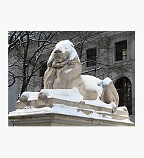New York Public Library Lion Photographic Print