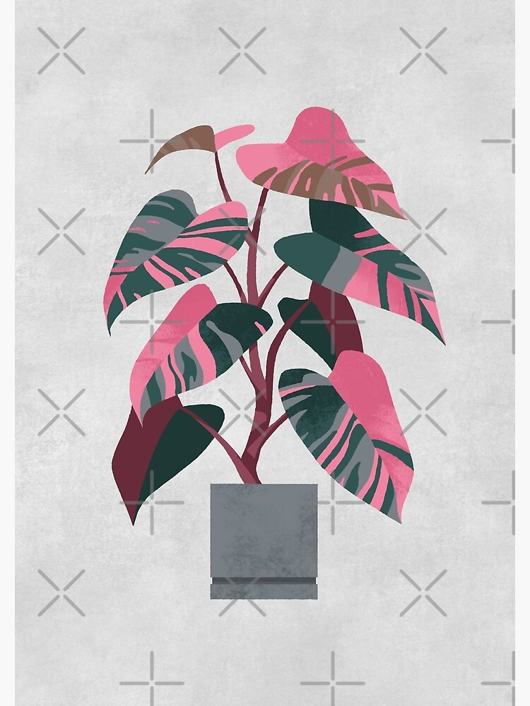 Philodendron pink princess by ikerpazstudio