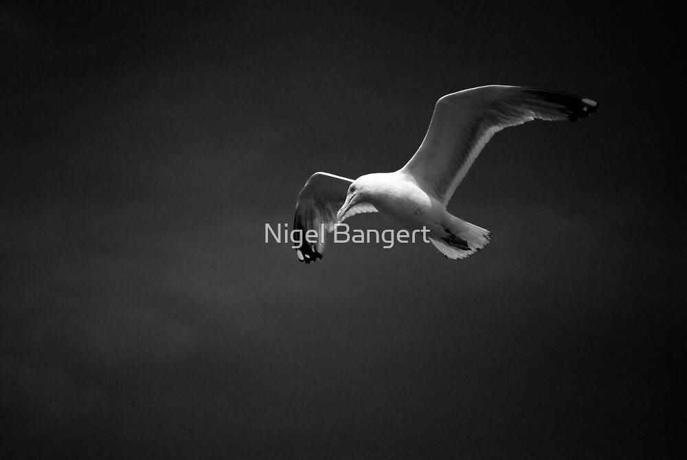Gull by Nigel Bangert
