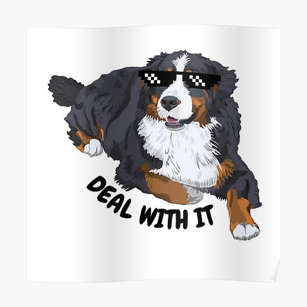 Funny Bernese Meme - Deal With It Poster