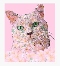 Pink Flower Face Cat Photographic Print