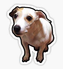 Gnar Jack Russell Terrier Sticker