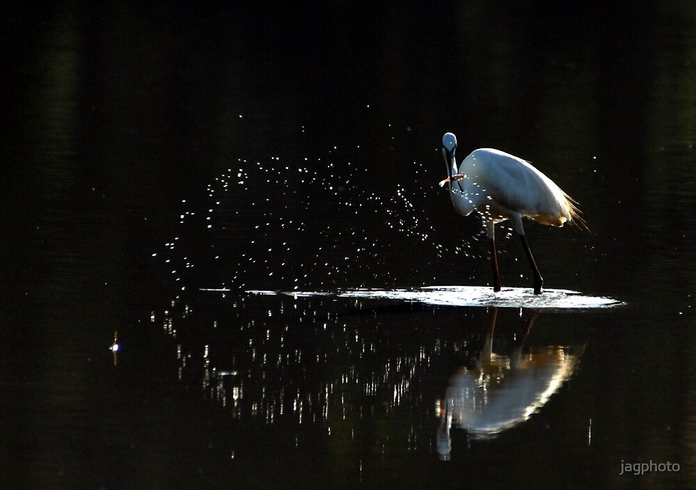 Egret's dinner by jagphoto