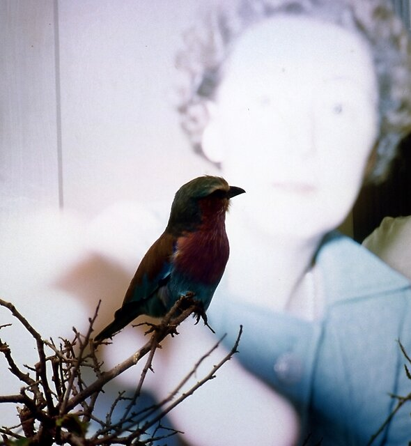 35mm Found Slide Composite - Bird Woman by peahix