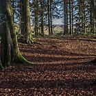 Grim's Ditch, Buckinghamshire by Robertsphotos