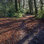 Light on the path, Buckinghamshire. by Robertsphotos