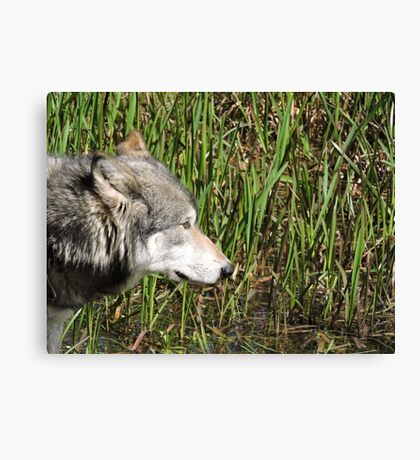 Little Reed Canvas Print