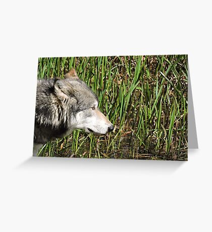 Little Reed Greeting Card