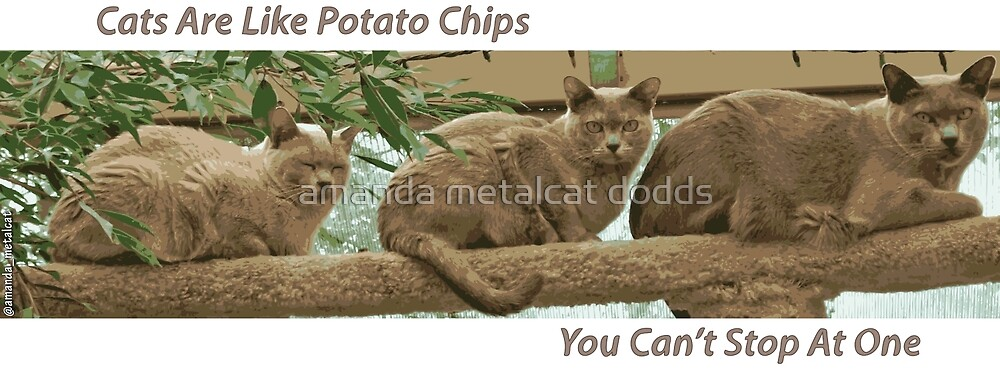 Cats Are Like Potato Chips by amanda metalcat dodds