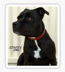 Staffy Dog Sticker