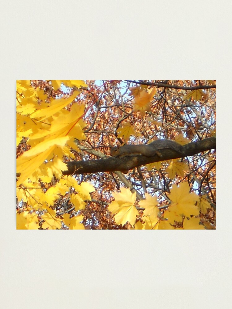 Alternate view of Become the Branch... Photographic Print