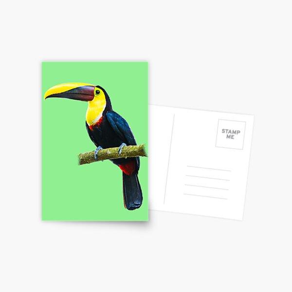Toucan on a Branch Postcard